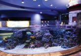 Aquariums & Pool Windows