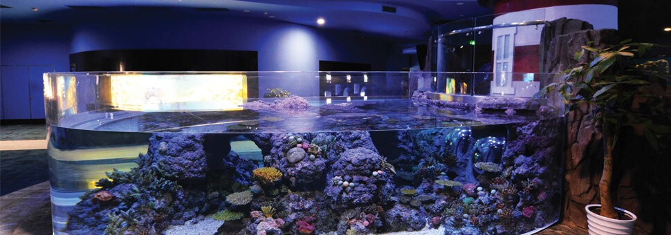 PLEXIGLAS® Pool & Aquarium Windows