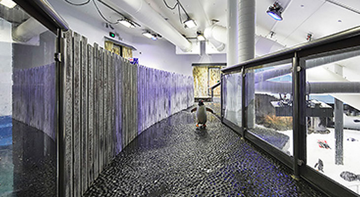 Penguin-Enclosure-at-Sea-Life-Sydney-Aquarium3.jpg