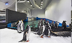 Penguin Enclosure at Sea Life Sydney Aquarium